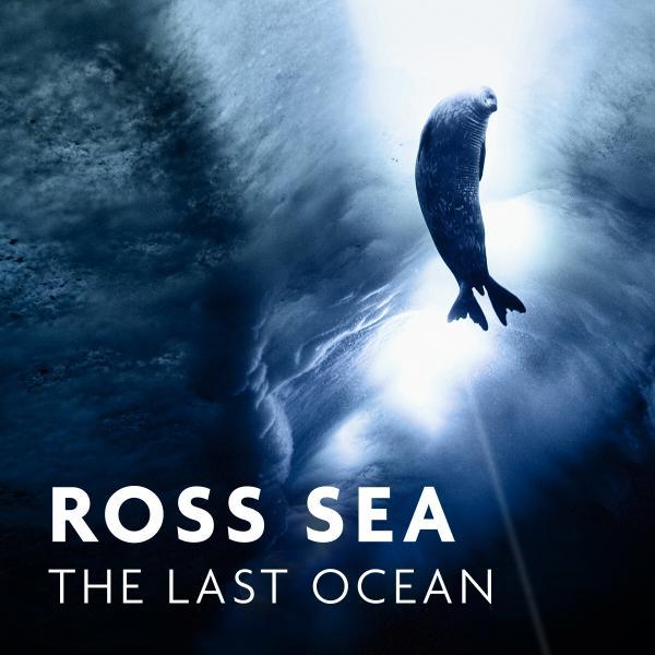 Seal swimming in sea