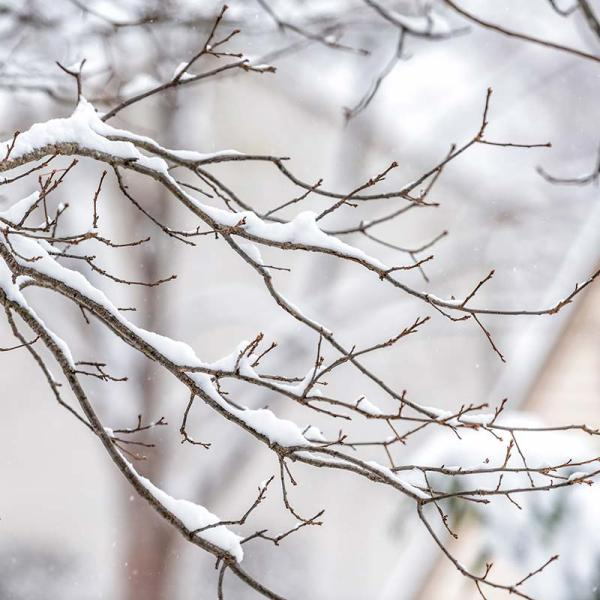 bare branches in winter