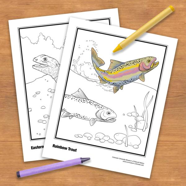 Coloring book pages with crayons