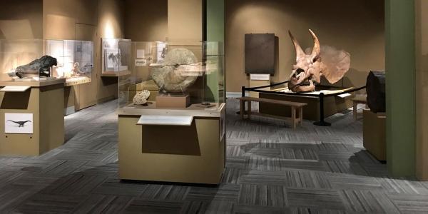 Paleontology hall with skulls