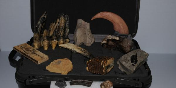 Fossils outreach kit