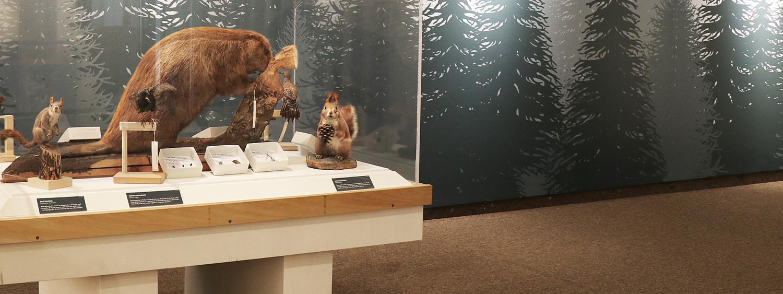 forest animals in exhibit space