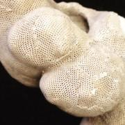 Lumpy, conical shell with tan net-like texture.