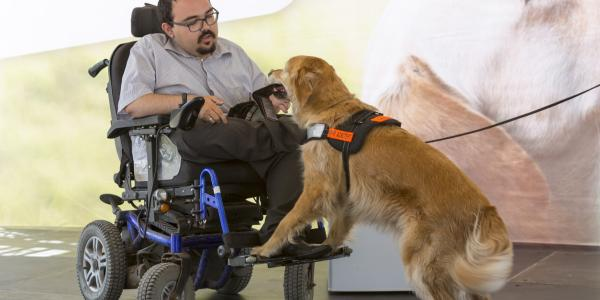 man in wheelchair being assisted by service dog