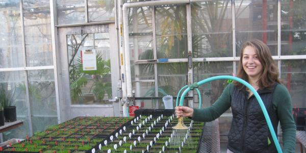 Casto waters plants in a greenhouse.