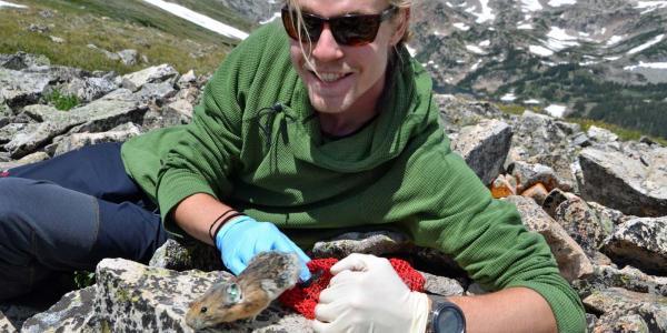 Max Wasser studies pikas near Mountain Research Station west of Boulder