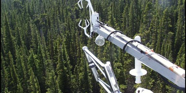 Niwot Ameriflux tower arm over trees