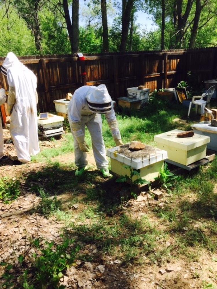 John examining bee hives using protective gear
