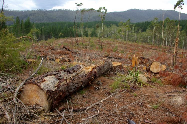 Fallen tree in deforested land