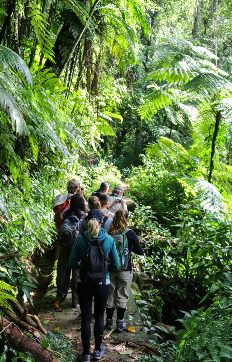 Students walking through the the Atlantic Forest in Brazil.