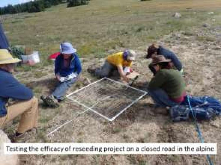 students making a grid on a test site