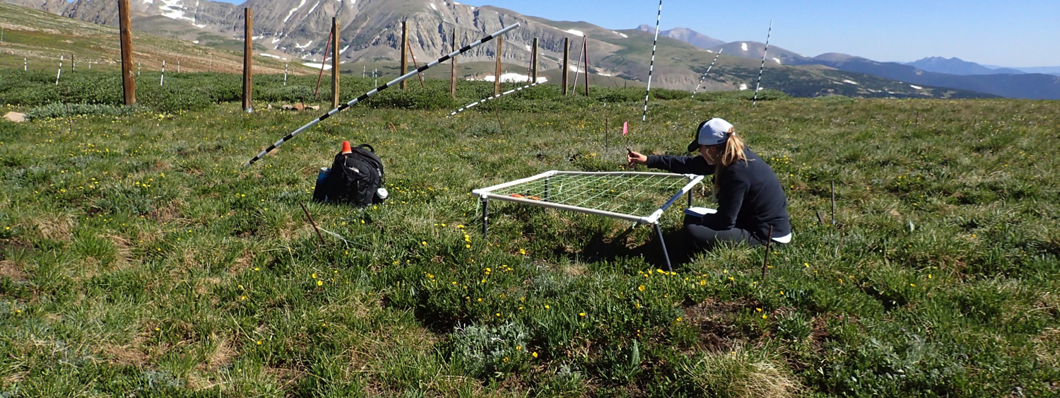 EBIO Student Eve Beaury conducts research on Niwot Ridge.