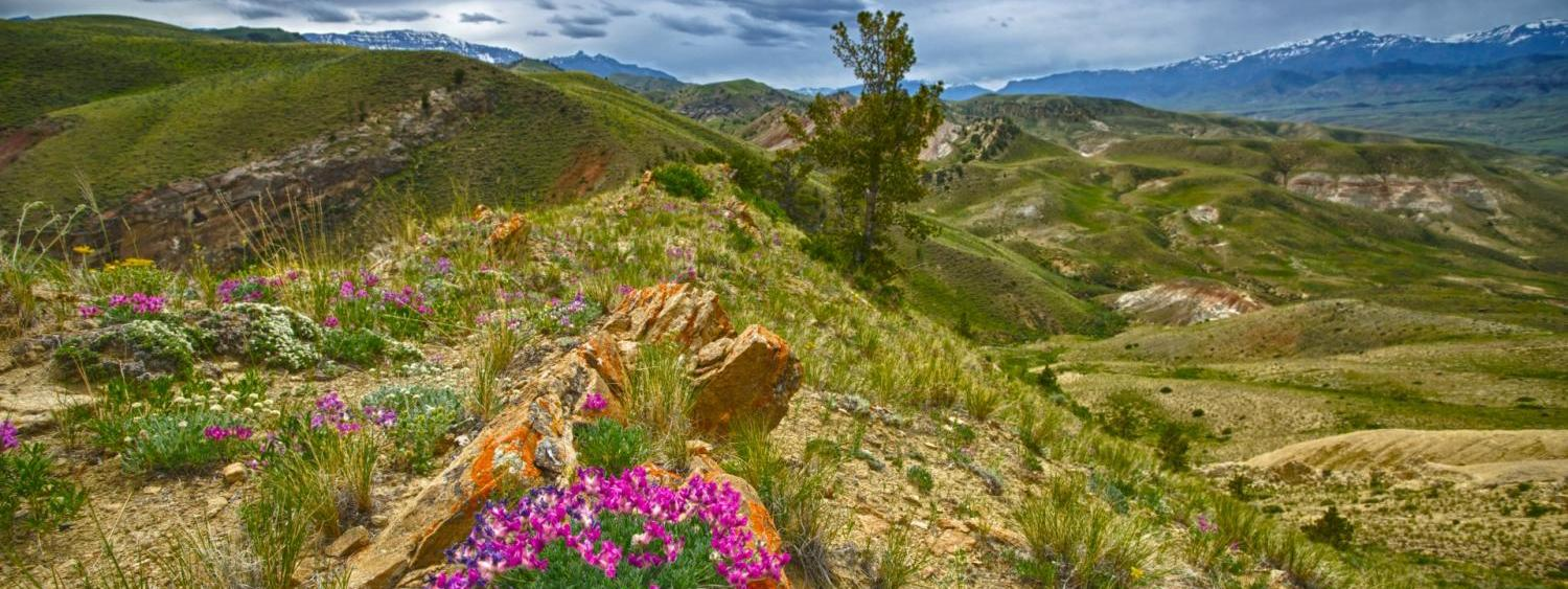 Rocky Mountain flower scene scape