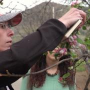 sudding examining an apple tree