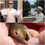 three panel photo of Dylan working and displaying fish parasites