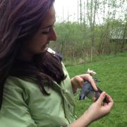 Kathryn Grabenstein holds a bird and examines its wing.