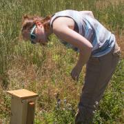 Morphew examines an artificial beehive.