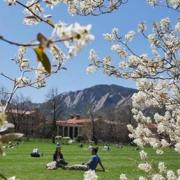 cu boulder campus in the spring, spring buds frame up a wide angle shot of a green field and the campus buildings behind it