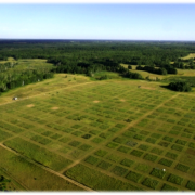 Field containing different-colored patches of vegetation.