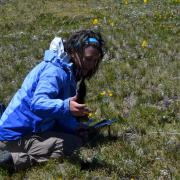Stefanie sampling soil up on Niwot Ridge against a backdrop of spring wildflowers and mountain views