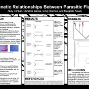 Phylogenetic Relationships Between Parasitic Flatworms, by Abby Kimball, Christina Garcia, Emily Hannon, and Margaret Arcudi