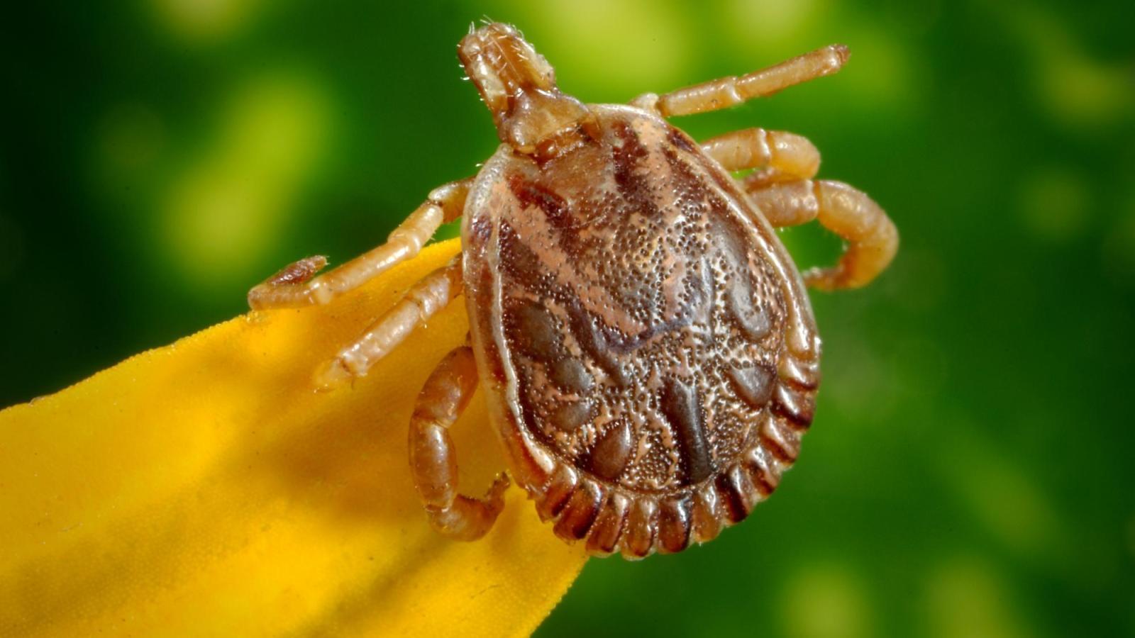parasite on a flower stigma