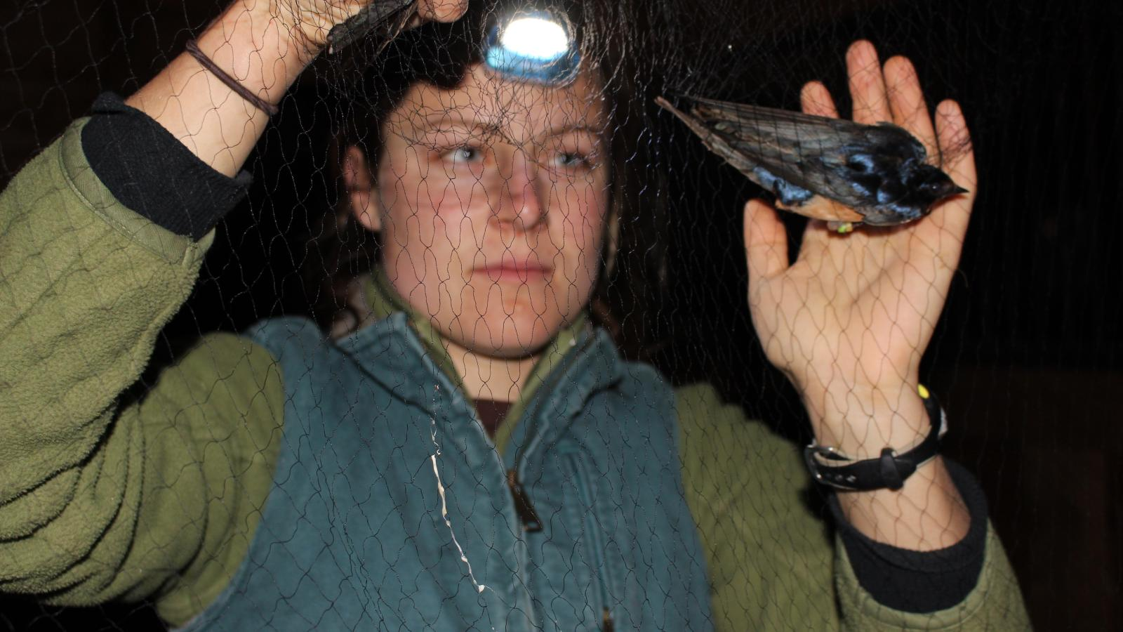 Amanda Hund, examining a barn swallow, captured in a net