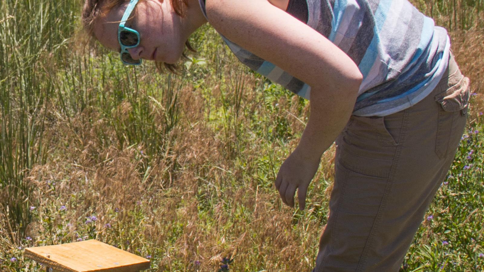 Morphew examines an artificial beehive.