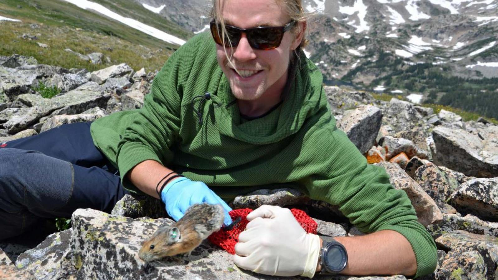 Max Wasser studies pikas near Mountain Research Station west of Boulder