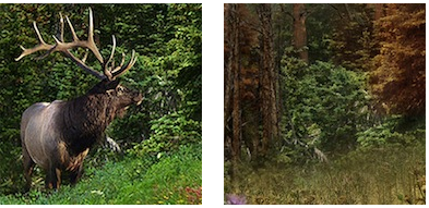 Climate change impacts to moose in Colorado