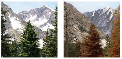 Climate change impacts on Forests in Colorado