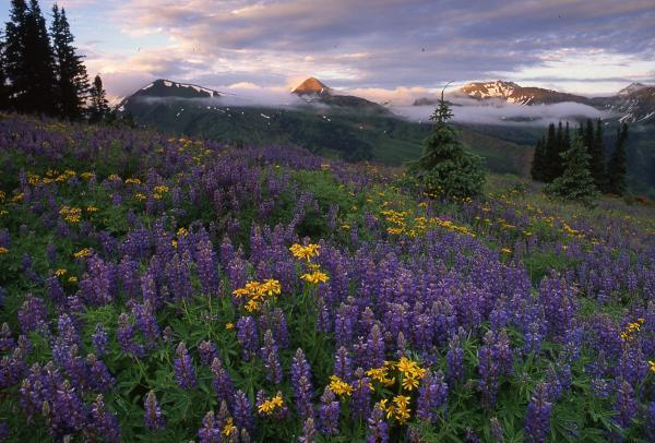Beautiful Colorado wildflowers