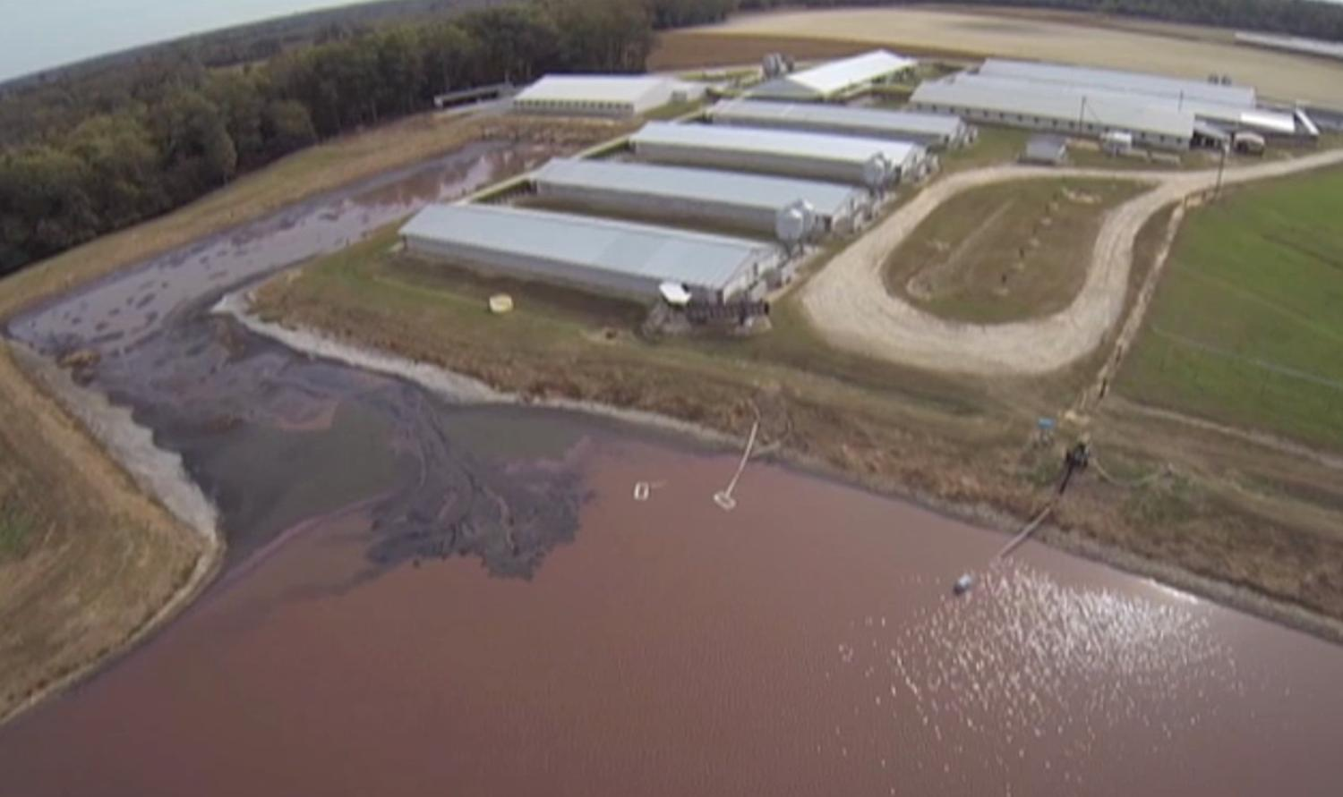 Factory Farm for cattle showing pollution