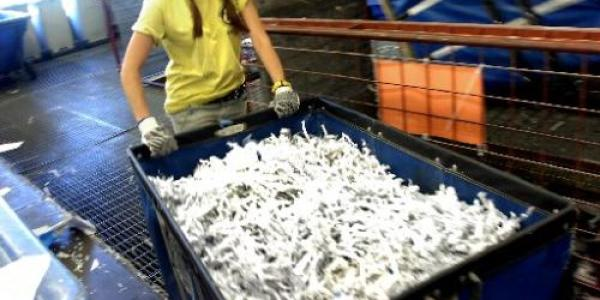 Girl in yellow shirt Moving shredded Paper in Cart