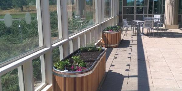 Garden boxes created with sustainable CU grant funding