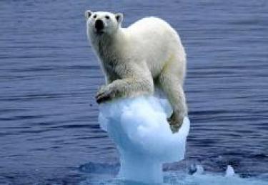 polar bear on sinking iceberg