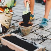 hands filling pot with potting soil