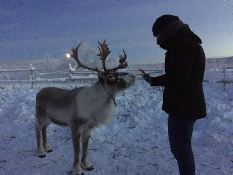 A student and an animal in Sweden