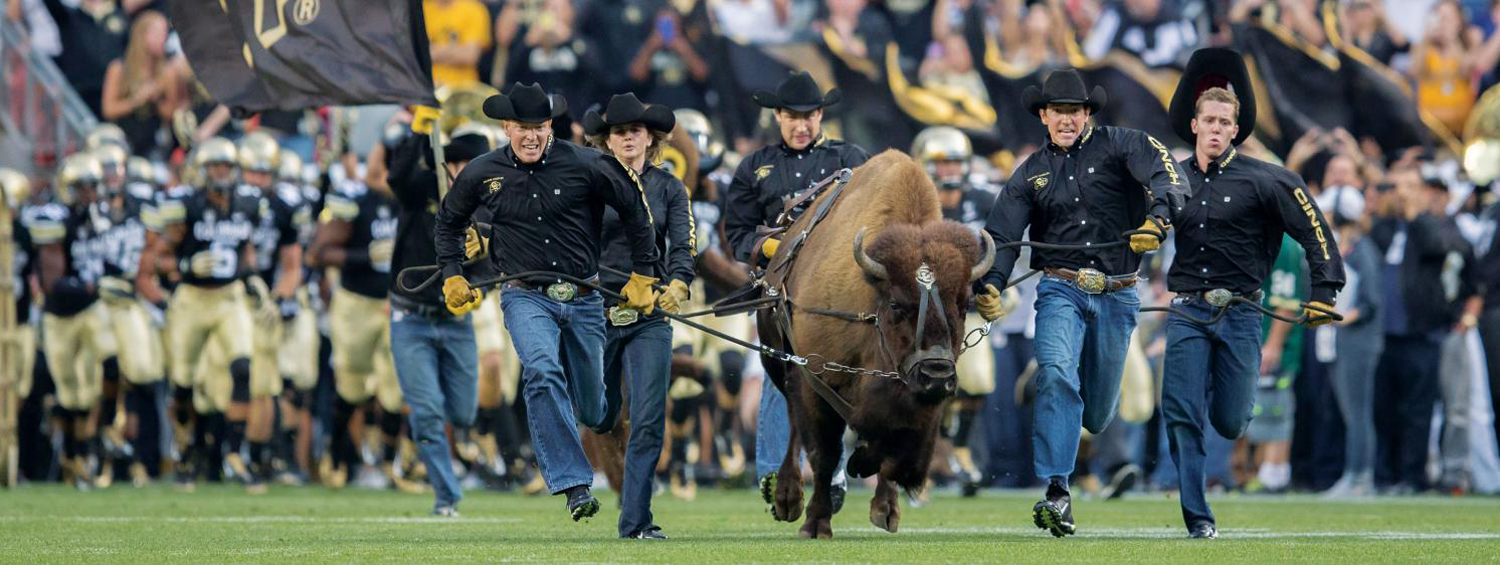 Ralphie handlers run the buffalo on CU's football field