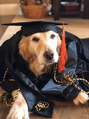 Tulip the dog wearing graduation regalia