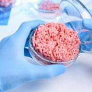 Hamburger in a petri dish held by gloved hands in a lab