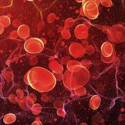 Blood in an artery