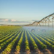 Irrigation in a crop field