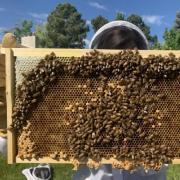 Researcher holding bee hive up