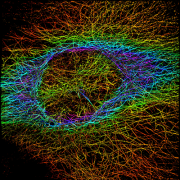 Gaussian colorized microtubules
