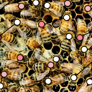 Bees with agent models