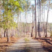 Land in Alabama for the project