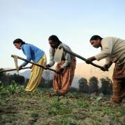 Female farmers work in field in India