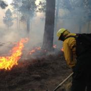 A firefighter at work on the scene of a forest fire.