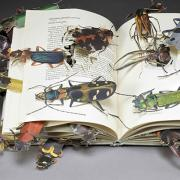 Insects crawling out of a book